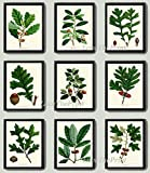 good will hunting edited - Botanical Print Set of 9 Antique Beautiful Redoute Acorn Tree Branch Green Leaf Nuts Forest Nature Home Room Decor Wall Art Unframed