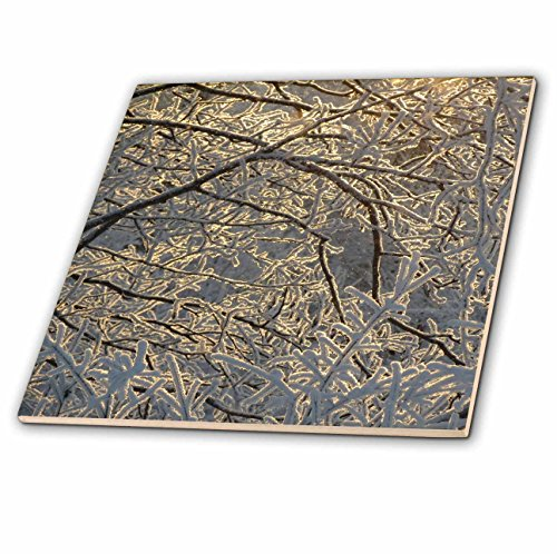 3dRose Sven Herkenrath Nature - Winter Day Beautiful Tree Branches Covered in Snow - 8 Inch Ceramic Tile (ct_280418_3)