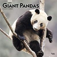Giant Pandas 2020 2020 Square Wall Calendar