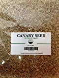 (US) Canary Seed/ Alpiste