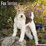 Fox Terrier Calendar - Dog Breed Calendars - 2017 - 2018 wall Calendars - 16 Month by Avonside
