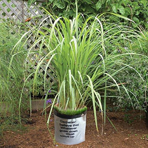 Roots Organic Grow Bags - 5
