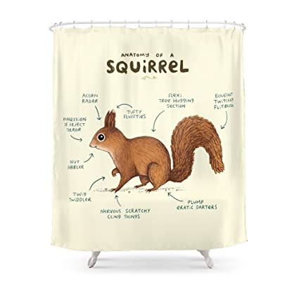Society6 Anatomy Of A Squirrel Shower Curtain 71quot