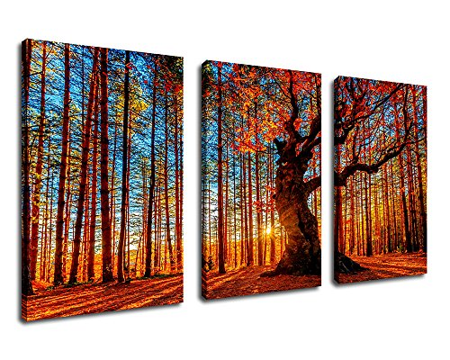 Canvas Wall Art Red Forest Woods Sunset Nature Picture - 30