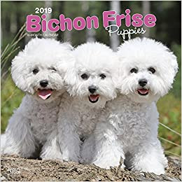 Bichon Frise Puppies 2019 12 x 12 Inch Monthly Square Wall