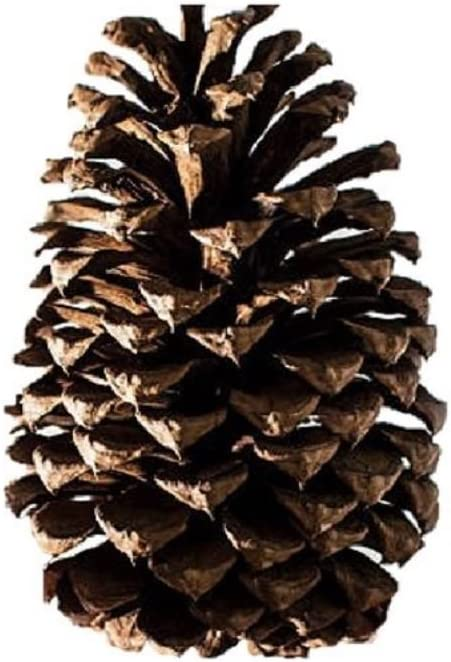 2 Pound Box Assorted Natural Pine Cones by 123Posters