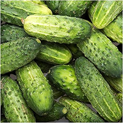 Package of 90 Seeds, Wisconsin SMR-58 Pickling Cucumber (Cucumis sativus) Non-GMO Seeds By Seed Needs