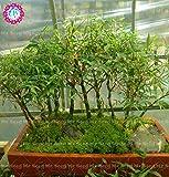40pcs rares Bonsai chinois bambou Graines Lucky Bamboo Graines Bureau Bureaux Décoration Potted usine pour jardin