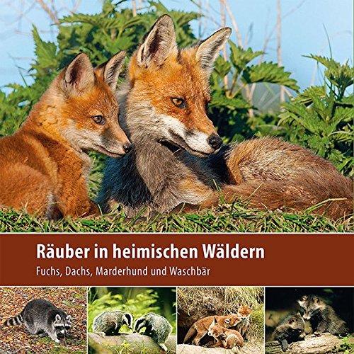 Räuber in heimischen Wäldern: Fuchs, Dachs, Marderhund und Waschbär