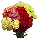 GlobalRose 100 Assorted Color Carnations- Beautiful Flowers- Absolutely Fresh