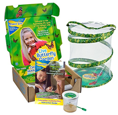 Insect Lore Live Butterfly Growing Kit Toy – 5 Caterpillars to Butterflies
