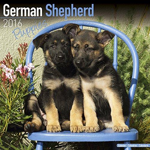 German Shepherd Puppies Calendar - Breed Specific German Shepherd Puppies Calendar - 2016 Wall calendars - Dog Calendars - Monthly Wall Calendar by Avonside