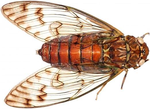 Vokmon DIY Pegatinas de Pared Huecas de Insectos im/án de calcoman/ías Que se pegan Etiquetas de cart/ón para la decoraci/ón casera LK04-Oro