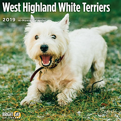 West Highland White Terrier 2019 16 Month Wall Calendar 12 x 12 Inches