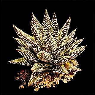 Pinkdose bonsai 100 pz Aloe vera flores erba rara fiore plantas Albero bonsai piante per la casa e il giardino fai da te bellezza estetica commestibile