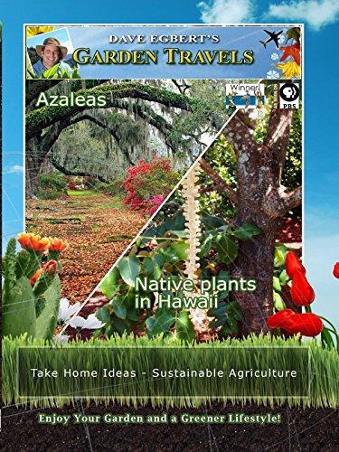Garden Travels - Azaleas - Native plants in Hawaii