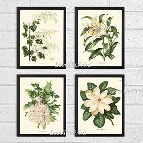 Botanical Antique Beautiful Magnolia Unframed product image