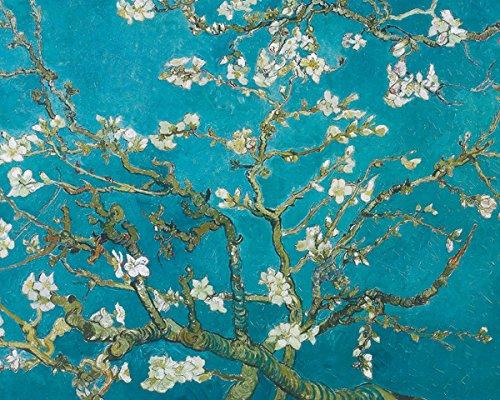 Vincent Van Gogh Almond Blossoms San Ramy Decorative Fine Art Poster Print 16x20