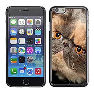VORTEX ACCESSORY Hard Protective Case Skin Cover - persian shorthair short muzzle cat - Apple iPhone 6