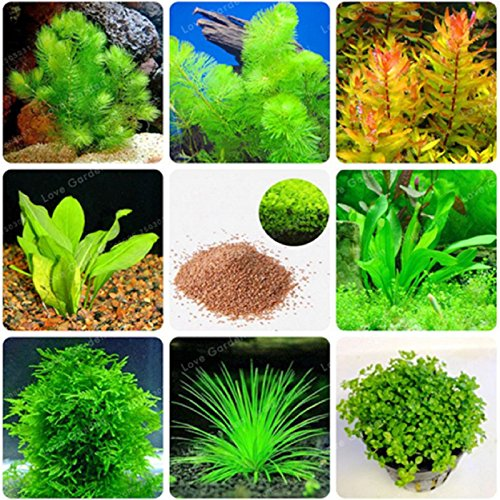Hot Sale! 200 Pcs New Aquarium Grass Seeds (Mix) Water Aquatic Plant Seeds Family Easy Plant Seeds For Decorate The Aquarium