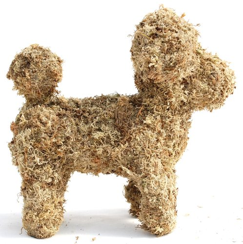 Baby Poodle Sphagnum Moss Topiary Form