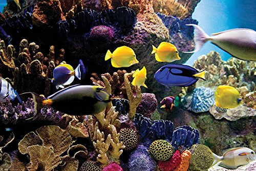 - Pyramid International Tropical Fish and Coral Reef Underwater Photo Poster 36x24 inch