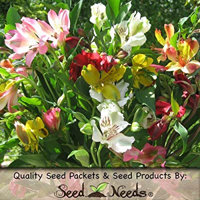 """25 Seeds, """"Dr. Salter's Mix"""" Peruvian Lily (Seeds By Seed Needs)"""
