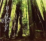 Hex by Bigelf (2007-10-30)