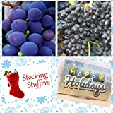 buy Homegrown Grape Seeds, 100, Grape 2 Bundle Concord Faith, Stocking Sized now, new 2018-2017 bestseller, review and Photo, best price $5.62