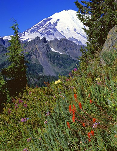 (Paintbrush and Mount Rainier, 13x19 inch fine art print, summer, wildflowers, landscape photo, nature photography, wall art, home decor, office decor, signed by the artist.)