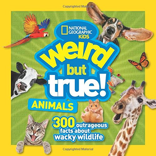 Weird But True Animals (Strange Cat)