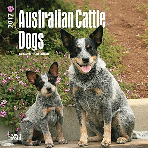 "Australian Cattle Dogs 2017 Mini Calendar 7"" x 7"""