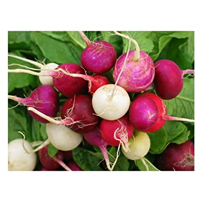 200 Premium Seeds -Serendipity's Mixed Radish Collection- -Garden Vegetable- Sweet Gourmet -Colorful Array- Salads and Sandwiches : Garden & Outdoor