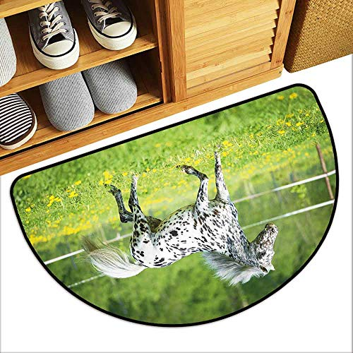 DILITECK Pet Door mat Horse Decor Appaloosa Horse Runs Trot on The Meadow in Summer Time Farmhouse Rural Country Home Decor W31 xL20 Green Black White