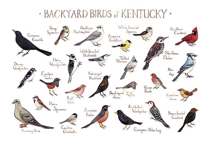 amazon com backyard birds of kentucky field guide art print handmade
