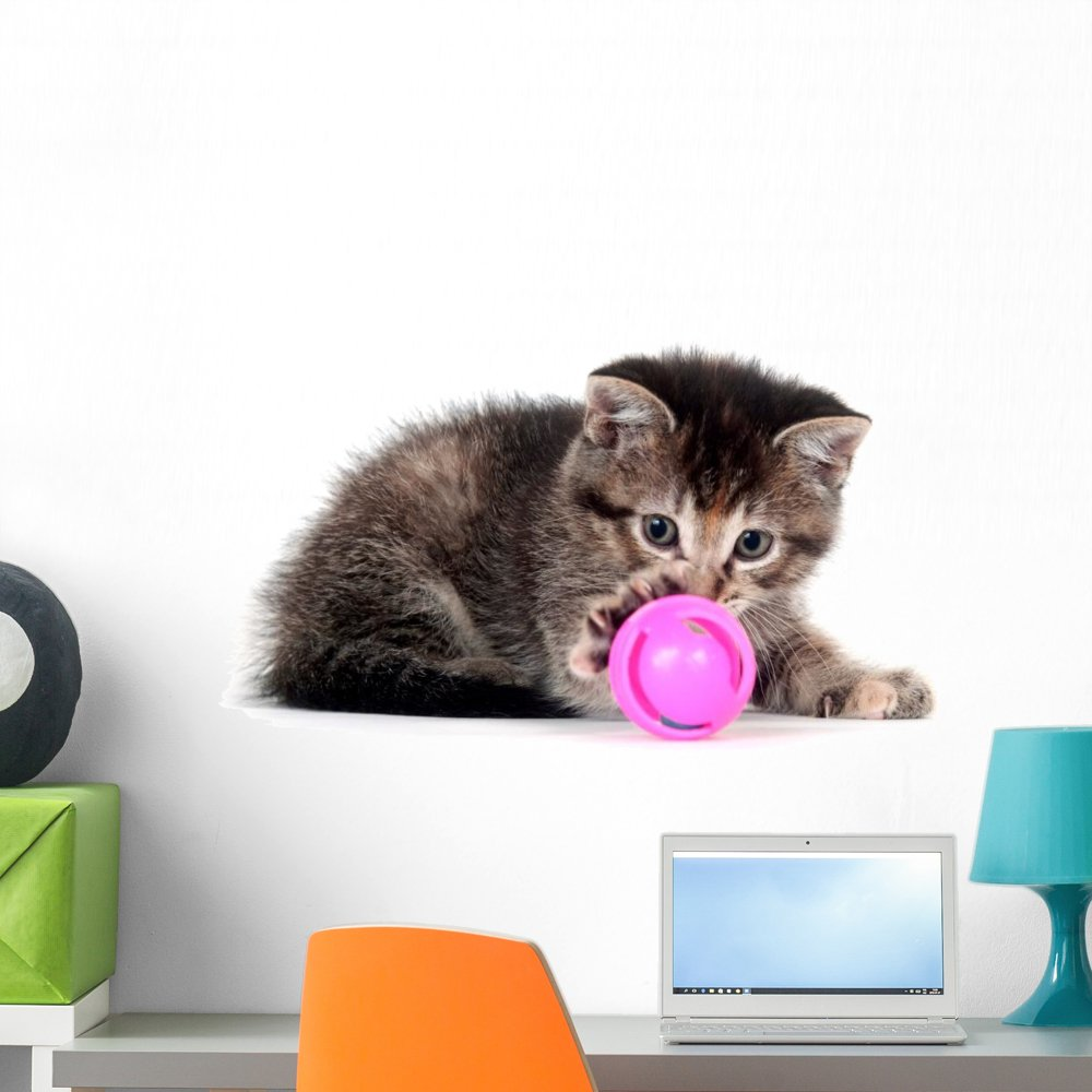 Wallmonkeys Tabby Kitten Playing with Toy Wall Decal Peel and Stick Graphic WM42227 18 in W x 12 in H
