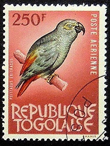 African grey parrot Psittacus Erithacus -Framed Postage Stamp Art 12391 (Stamp Framed)
