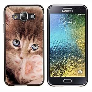 EJOOY---Cubierta de la caja de protección para la piel dura ** Samsung Galaxy E5 E500 ** --Maine Coon gatito azul de la pata de Ojos
