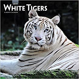 White Tigers Weiße Tiger 2019 18 Monatskalender Wall Kalender