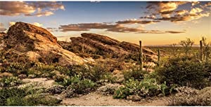 AWERT Reptile Habitat Background Blue Sky Oasis Cactus Sun and Desert Terrarium Background Durable Polyester Background