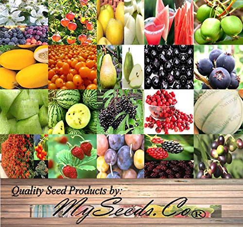 FRUITS & BERRIES Seed COMBO KIT - from Apple Delicious to Watermelon Petite Yellow Seeds - By MySeeds.Co (Fruits & Berries Kit)