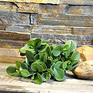 FYYDNZA 1 Pc Artificial Plants Round Leaf Pu Meat False Plants 115