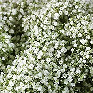 WinnsFlora 10 Branches (Pcs) Gypsophila Baby Breath Artificial Flower Bouquet, Approx. 900 Beautiful WHITE Flowers for Wedding Bridal Party Home Floral Arrangement Decor 80