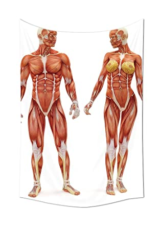 Amazon Human Anatomy Tapestry Male And Female Bodies With Inner