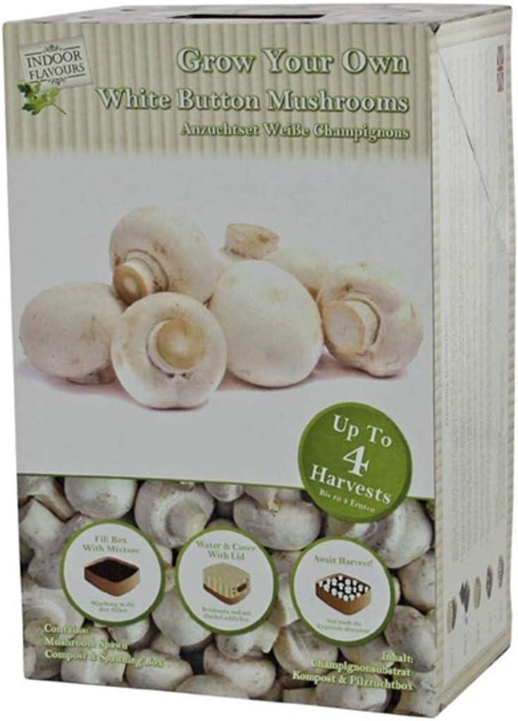 SETAS kit para el cultivo en casa de champignon comestibles: multiples cultivos para cada Envase. El regalo del Momento