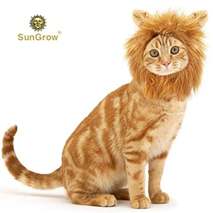 ae577aab5 SunGrow Cat Lion Mane - Breaking News! Mountain Lion Spotted in California  was Actually just