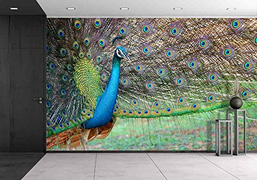 Cheap  wall26 - Portrait of Beautiful Peacock with Feathers out - Removable Wall..