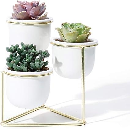 Amazon Com 3 Piece Ceramic Succulent Planter Pots 3 Inch Modern Century Indoor Cactus Container With Golden Metallic Stand Suspended Base Legs And Watering Drain Holes Garden Outdoor