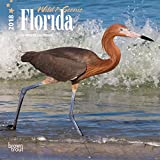 Florida, Wild & Scenic 2018 7 x 7 Inch Monthly Mini Wall Calendar, USA United States of America Southeast State Nature