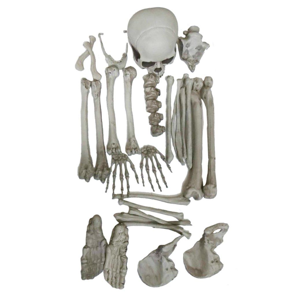 Homyl Various Decorative Animal Head Skulls Replica Model For Halloween Bar Decor - Skeleton